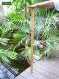 10 x Tuteurs en Bambou 150cm x Ø 16-18 mm_