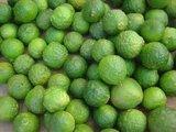 Citrus hystrix - hauteur totale 50+ cm - pot 14 x 14 cm_