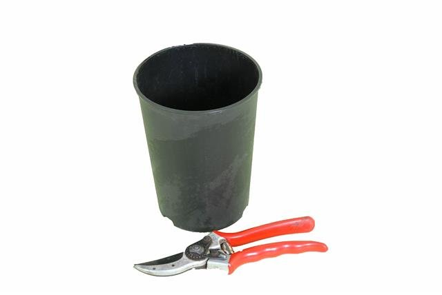 Pot profond rond pour palmier 2 litres